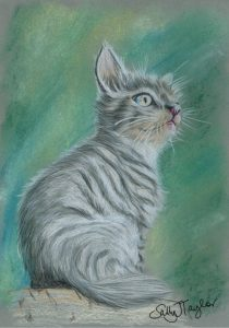 Tabby Cat in coloured pencils
