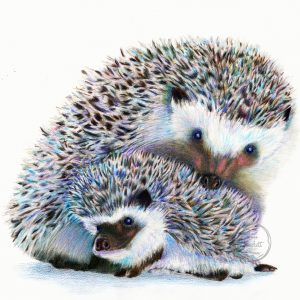 Loving Hedgehogs